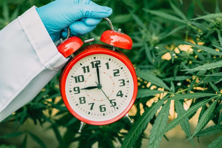Does Cannabis Alter Your Perception of Time?